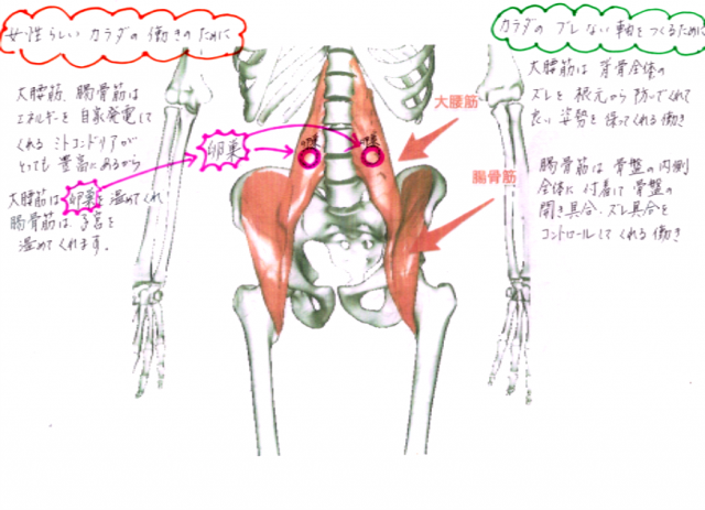 慢性腰痛4